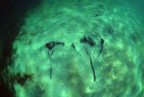 bimini stingrays 2007 0