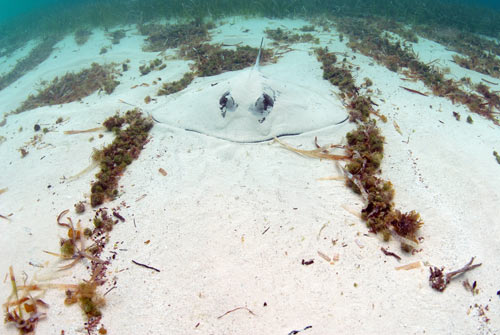 bimini stingrays 2007 2