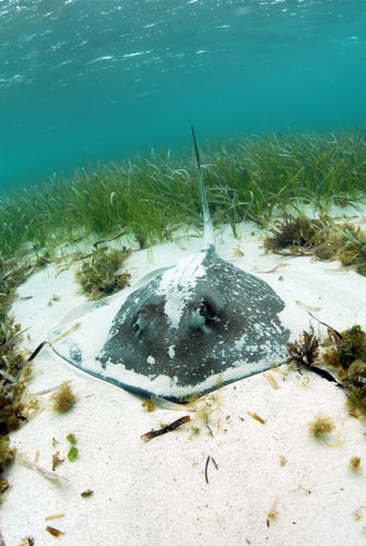 bimini stingrays 2007 3