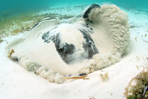 bimini stingrays 2007 4