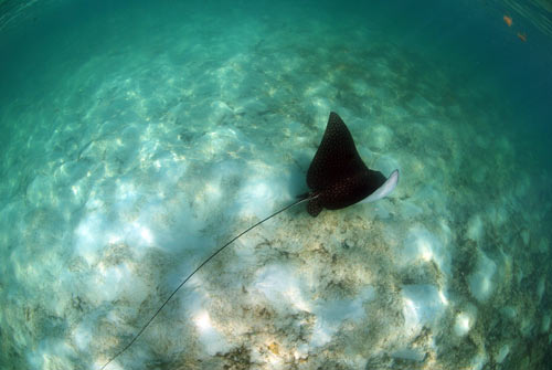 bimini stingrays 2007 6
